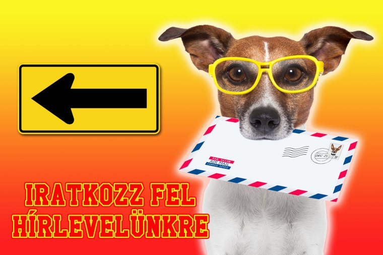 14009757 - dog with glasses delivering air mail envelope with stamp